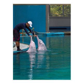 Instructor que acaricia al delfín durante la postal