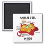 Interior animal de la célula (biología celular del imán de frigorifico