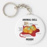 Interior animal de la célula (biología celular del llavero