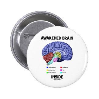 Interior despertado del cerebro (anatomía del chapa redonda 5 cm