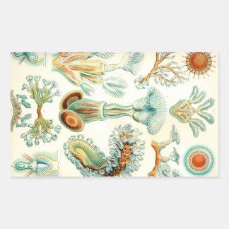 Invertebrados de los Bryozoa de Ernst Haeckel Pegatina Rectangular