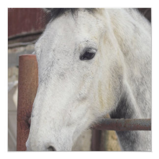 Invitación árabe blanca del caballo