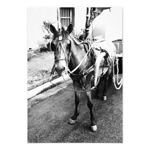 Invitación blanco y negro del caballo