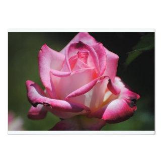 Invitación color de rosa rosada de Kordes Perfecta