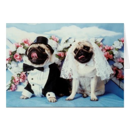 Tarjetas de invitación de perros pug - Imagui