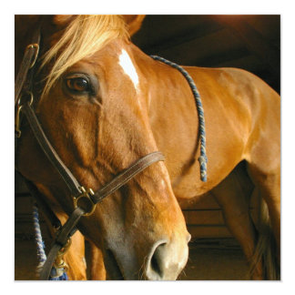 Invitación de la foto del caballo de la castaña