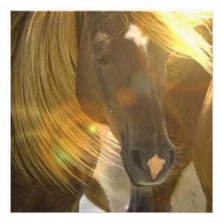 Invitación de la foto del caballo salvaje