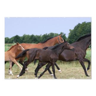 Invitación de los caballos salvajes