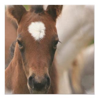 Invitación del bebé del caballo