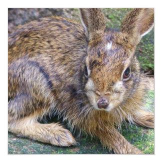 Invitación del conejo del bebé