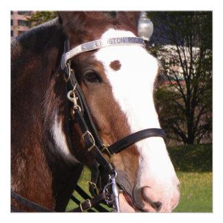 Invitación del rescate del caballo de proyecto