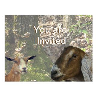 Invitación-personalizar del fiesta de la cabra de tarjeta postal