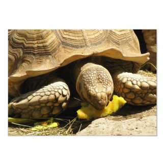 Invitaciones de la tortuga invitación 12,7 x 17,8 cm