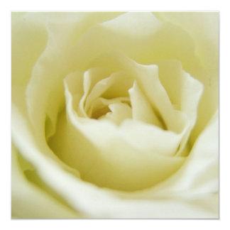Invitaciones del rosa blanco invitación 13,3 cm x 13,3cm