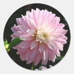 Invitaciones florales de la dalia de los pegatinas