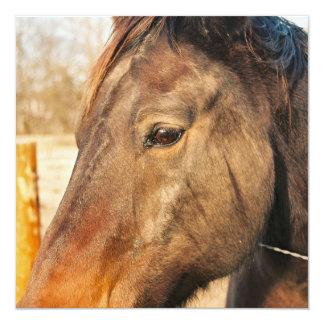 Invitaciones soñolientas del caballo de proyecto comunicado