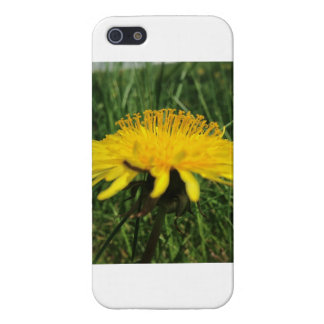 iPhone 5 Carcasa Diente de león