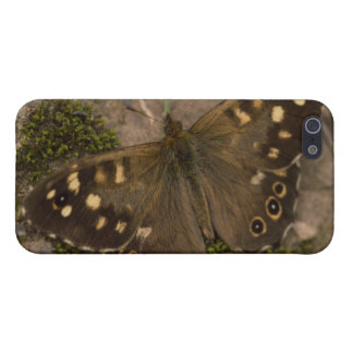 iPhone 5 Carcasas Mariposa de madera manchada