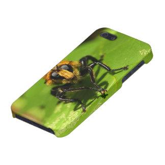 iPhone 5 Cárcasas Mosca de ladrón