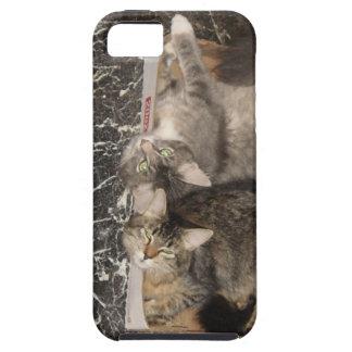 Iphone 5 casos adorables de los animales iPhone 5 Case-Mate fundas