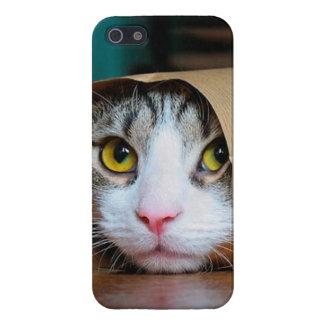 iPhone 5 Fundas Gato de papel - gatos divertidos - meme del gato -