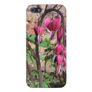 iPhone 5 Protectores Flores rosadas de los corazones sangrantes en la