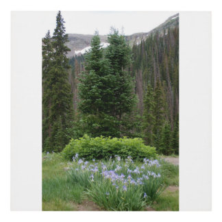 Iris altos en las montañas cuadro