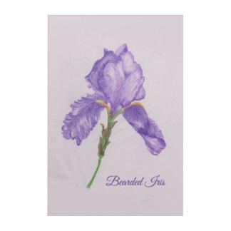 Iris barbudo púrpura coloreado del arte del lápiz