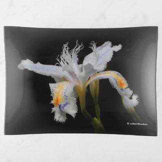 Iris con cresta elegante