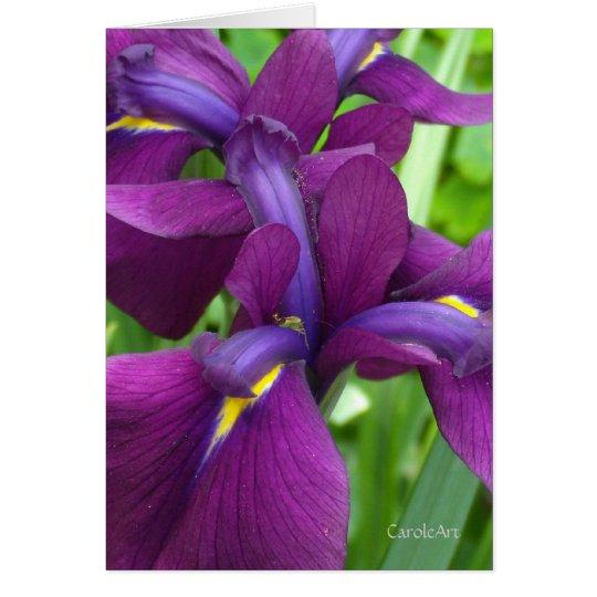 Iris de color morado oscuro tarjeta pequeña