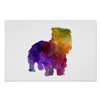 Irish Glen of Imaal Terrier in watercolor Póster