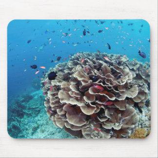 Isla coralina alfombrilla de ratón