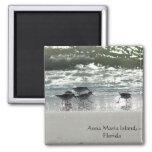 Isla de Ana Maria, la Florida Iman De Nevera