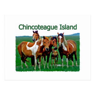 Isla de Chincoteague (potros) Postal