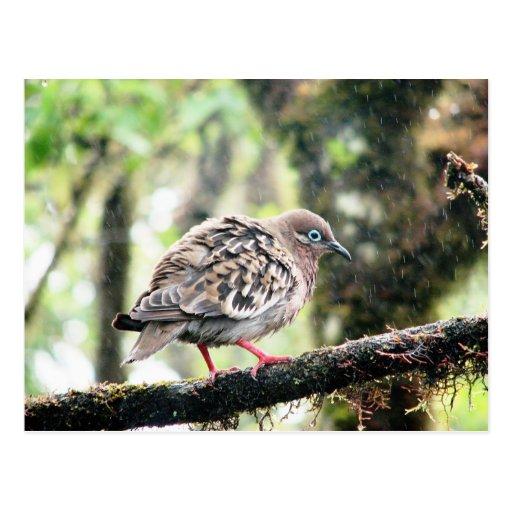 Isla de Santa Cruz, las Islas Galápagos, pájaro en Tarjeta Postal