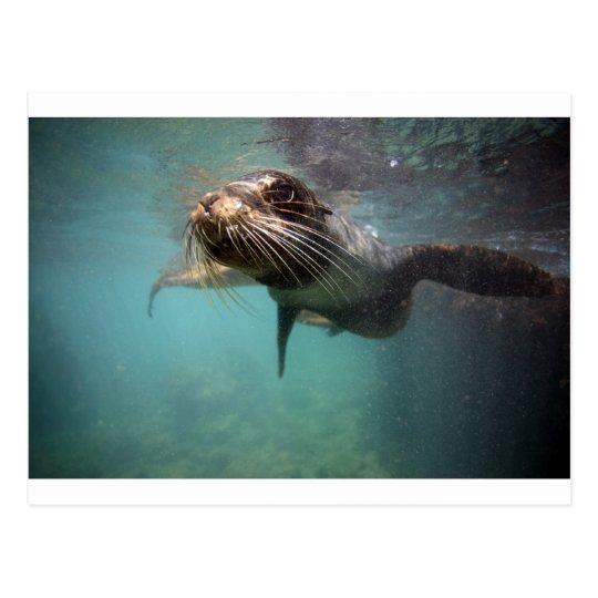 Islas de las Islas Galápagos subacuáticas del león Postal