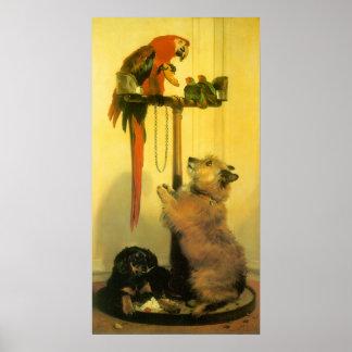 Islay, Tilco, un Macaw y pájaros del amor por Póster