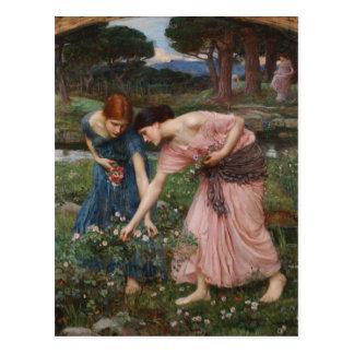 J.W. Capullos de rosa de YE del frunce del Waterho Tarjetas Postales