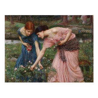 J.W. Capullos de rosa de YE del frunce del Waterho Postal