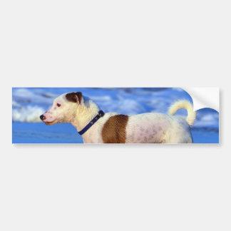 Jack Russell Terrier que corre en la playa Pegatina De Parachoque
