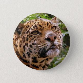 Jaguar inquisitivo chapa redonda de 5 cm