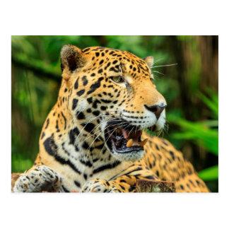 Jaguar muestra sus dientes, Belice Postal