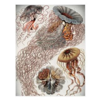 Jaleas (medusas) en colores en colores pastel postal