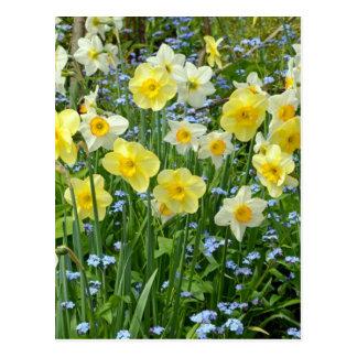Jardín amarillo hermoso del narciso postal