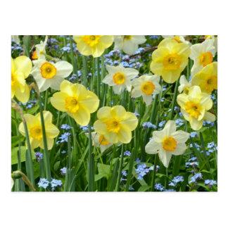 Jardín amarillo hermoso del narciso postales