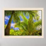 Jardín de Eden - palmas - Maui Hawaii Impresiones