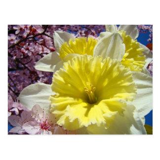 Jardín de flores amarillo del narciso de las posta tarjeta postal