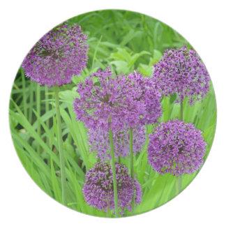 Jardín de flores púrpura del allium plato