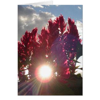 Jardín de la lectura de Glebe: Flores de llama en Tarjeta Pequeña