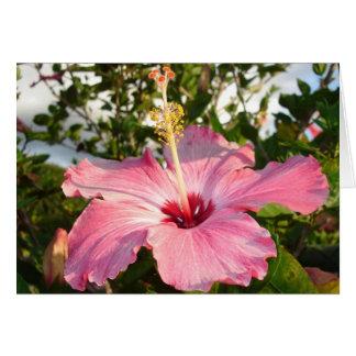 Jardín de la lectura de Glebe: Hibisco Tarjeta Pequeña